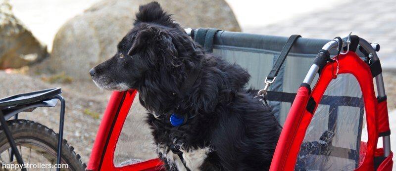 Fahrradanhänger Hund